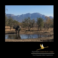 elephant-waterhole